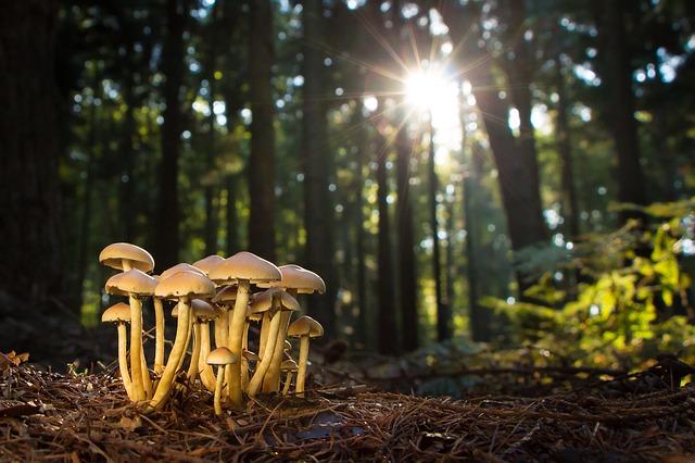 Műanyagevő gombát találtak